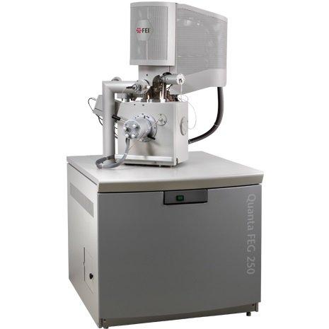 ENVIRONMENTAL SCANNING ELECTRON MICROSCOPE: SEM-QUANTA FEG-250 (ESEM)